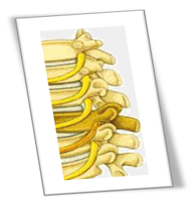 spinal_disc_2.png